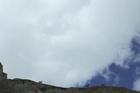 Ibex walking along mountain ridge below cloudy sky  Switzerland