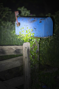 Ivy growing on blue mailbox