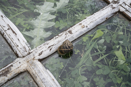 Snail shell on rustic window pane over weeds
