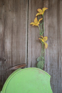 Yellow flower on wooden background