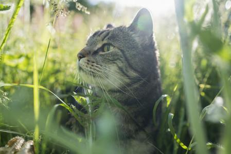 Close up curious cat in tall green grass