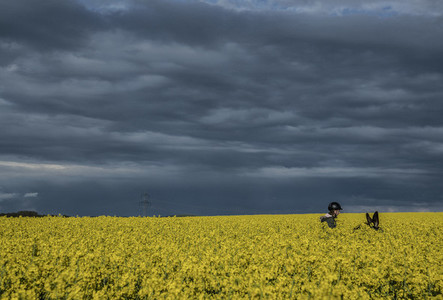 Girl riding donkey in vibrant yellow canola field below stormy sky