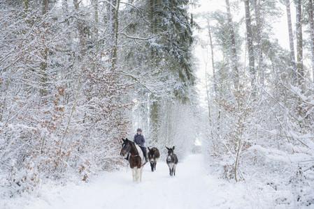 Donkeys following girl riding horse on snowy path