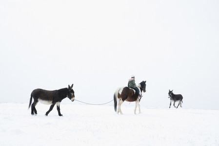 Girl on horseback leading donkeys by rope in snowy field