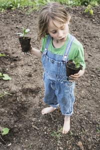 Cute girl in overalls planting seedlings in garden