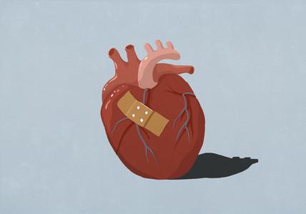 Bandage on human heart