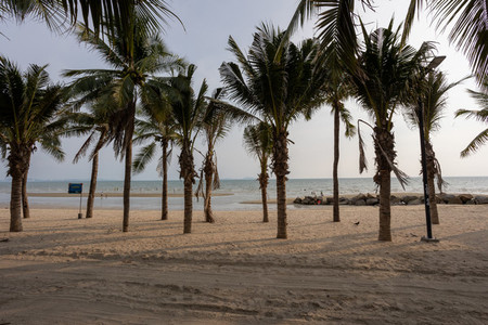 Coconut tree on Bangsaen beach in the evening time  Very few peo
