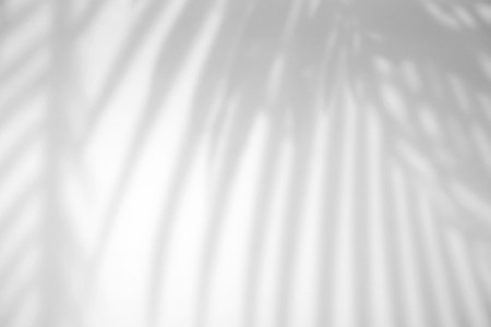 Realistic tropical leaves natural shadow overlay effect on white