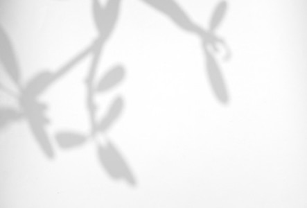 Leaves natural shadow overlay on white texture background  for o