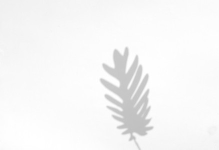 Palm leaves natural shadow overlay for summer on white texture b