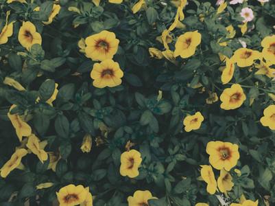 Organic image of a bush with beautiful yellow flowers