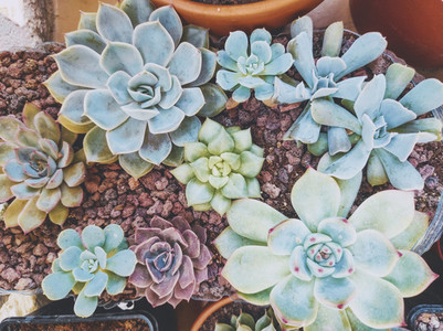 Beautiful image of a lot of variety of succulent plants