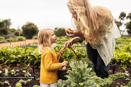 Mom showing her daughter a fresh onion in an agricultural field