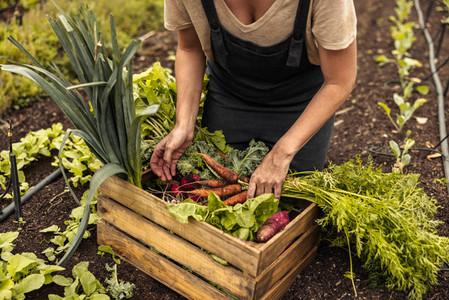 Arranging freshly picked vegetables