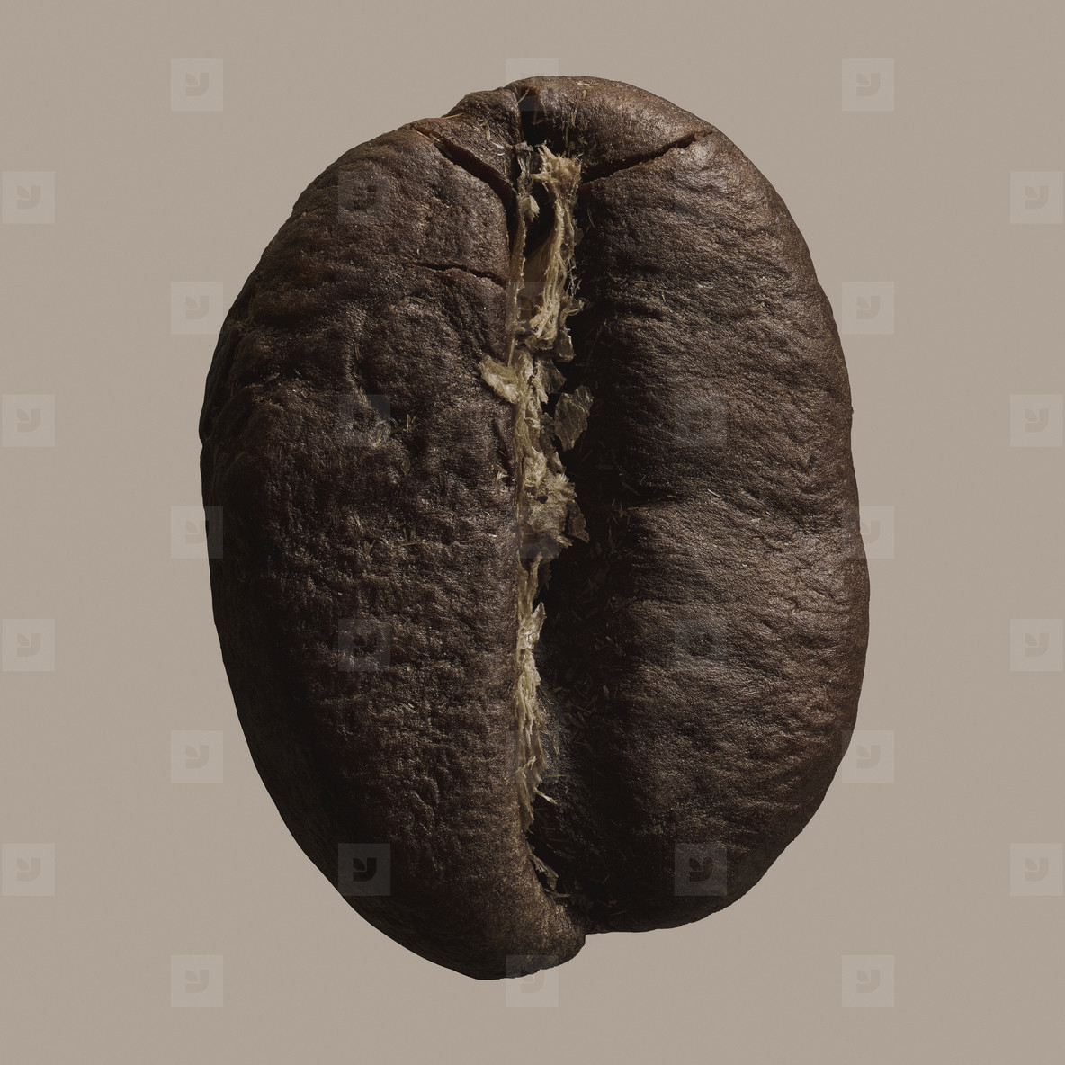 Close up brown coffee bean on gray background