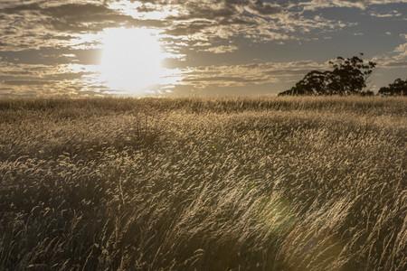 Sunset over idyllic rural field