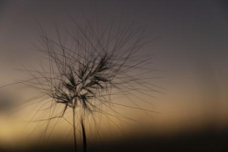 Close up spiky plant against dusk sky