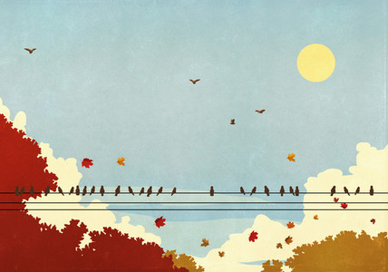 Birds on telephone wire against autumn trees and sunny blue sky
