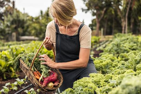 Picking fresh vegetable produce