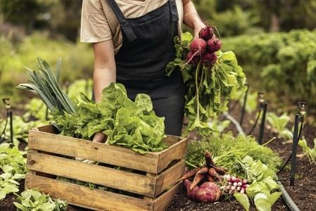 Female farmer gathering fresh vegetables on her farm