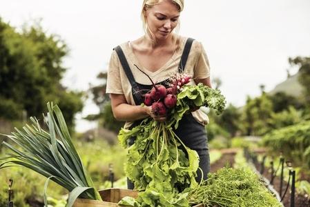 Self sustainable farmer harvesting a variety of fresh produce