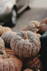 Pumpkin Festival  Zurich 6