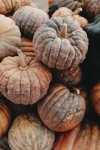Pumpkin Festival  Zurich 10