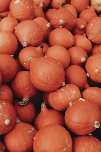 Pumpkin Festival  Zurich 18