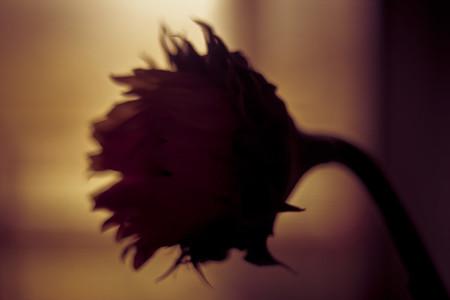 botanical 001