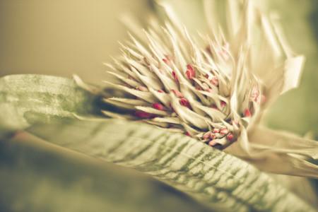 botanical 002