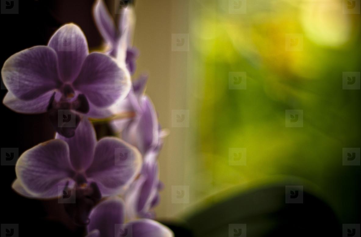 Botanical 004
