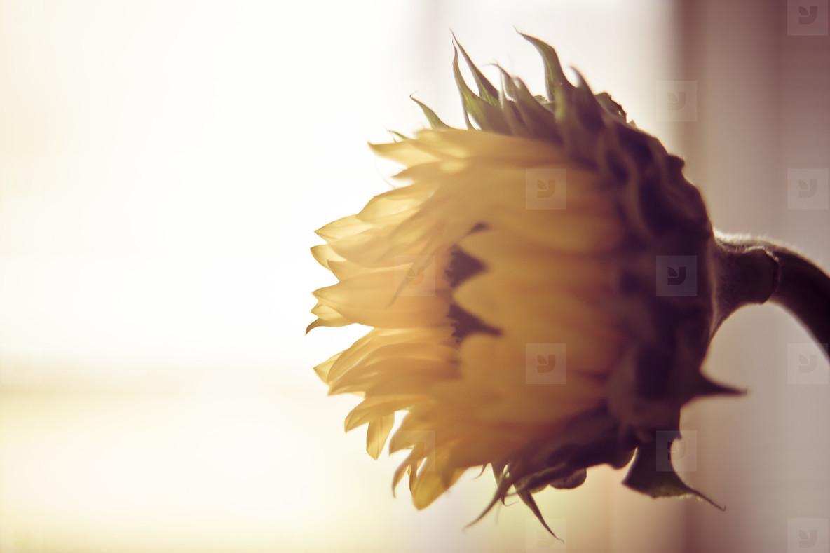 Botanical 005