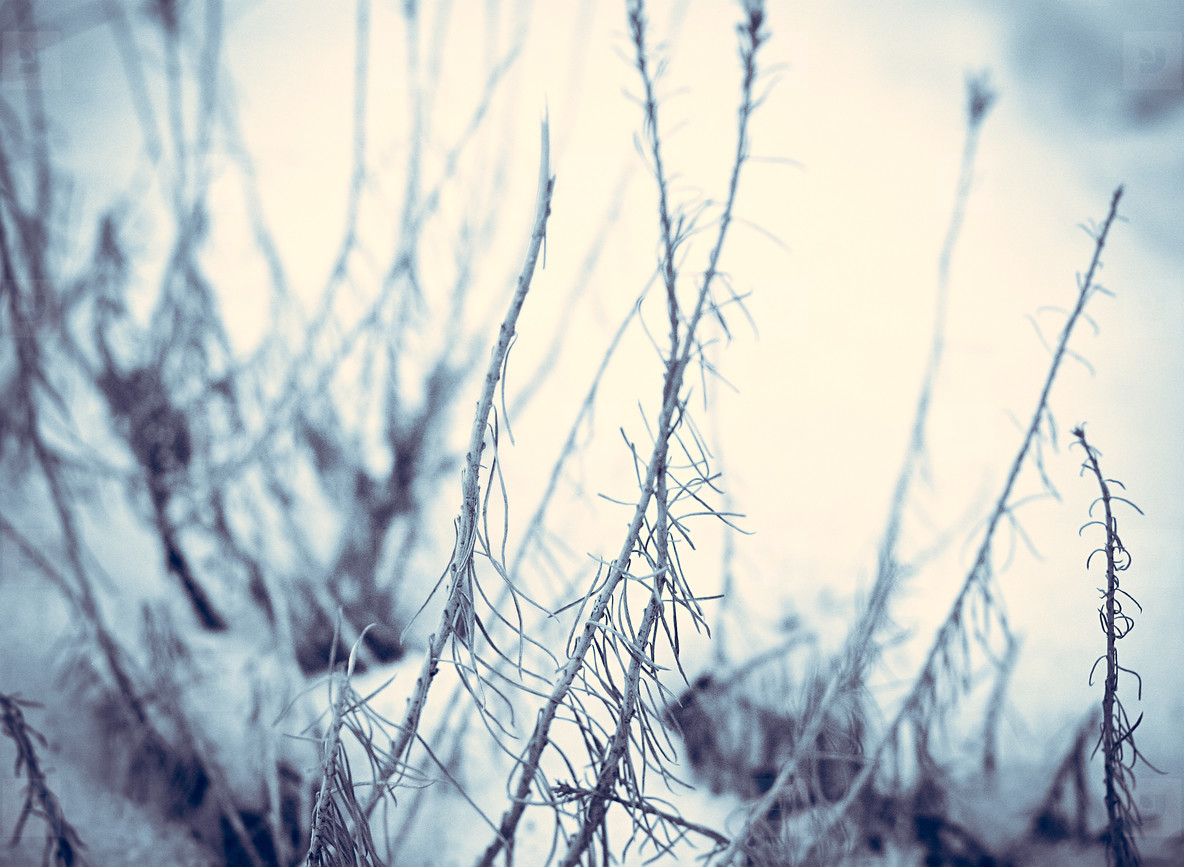 Winter Death