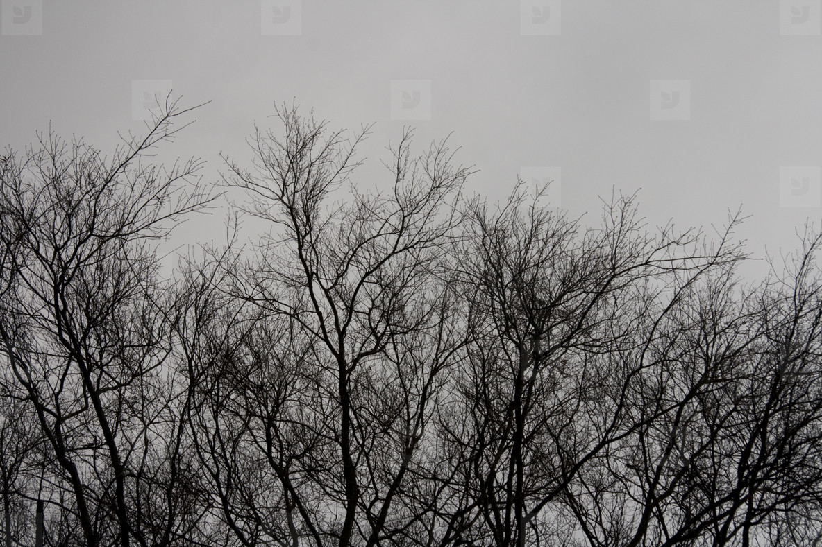 Tree branches silhouettte