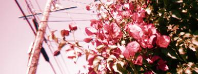 Botanicals Vintage