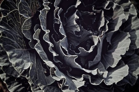 Unique Botanical