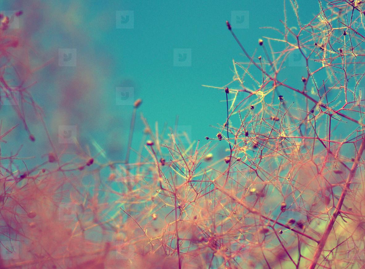 Psychedelic fibres