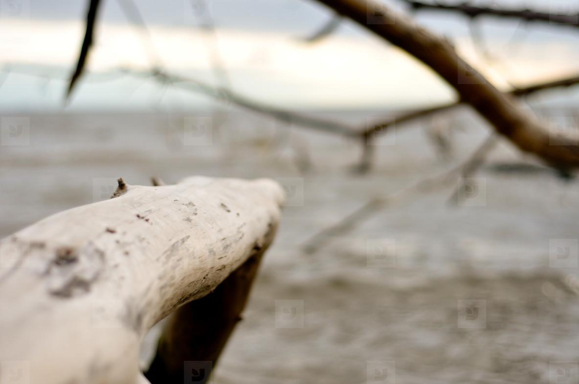 Tree on the Beach  1
