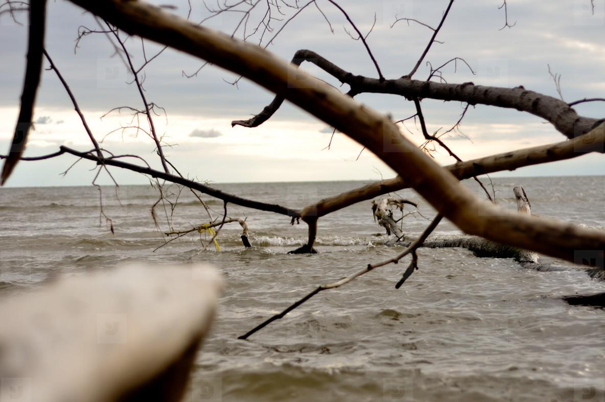 Tree on the Beach  2