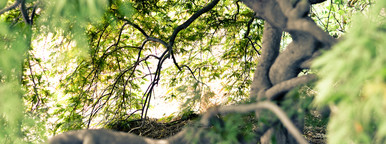 Evergreen Wish Tree  2