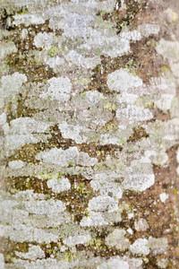 Tree Bark 2