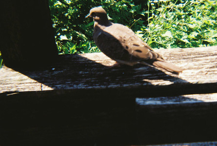Love Dove 2