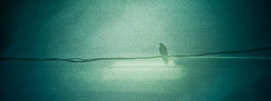 Bird on a Wire  is so overused