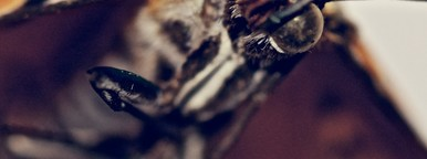 Insect Head B