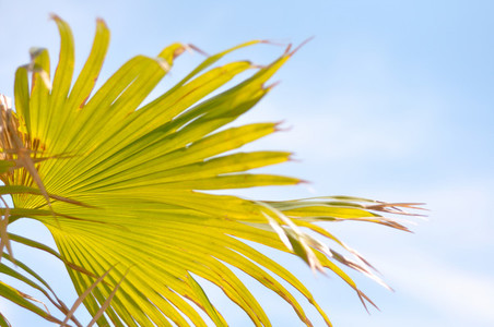 Palm Leaves and Blue Skies