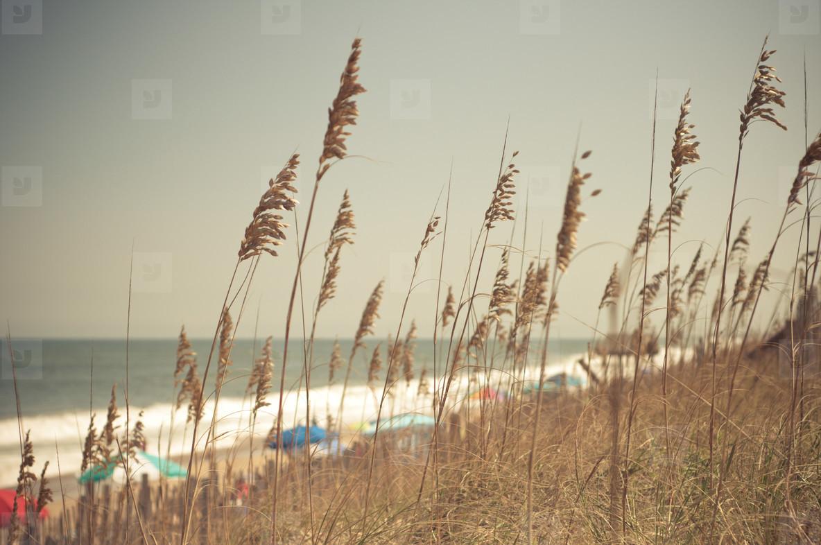 Sea Oats and Umbrellas