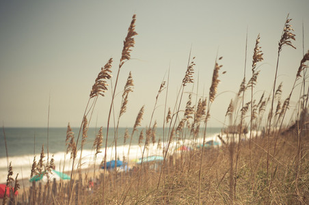 Sea Oats and Umbrellas
