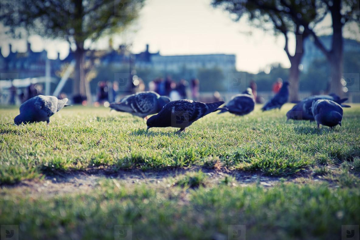 pigeons eye view