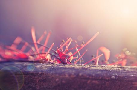 autumn red ivy