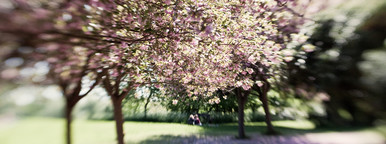 relaxing in the blossom
